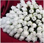 Білі троянди дарують коли бажають